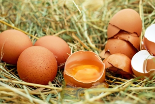 Pesticide residues in chicken eggs